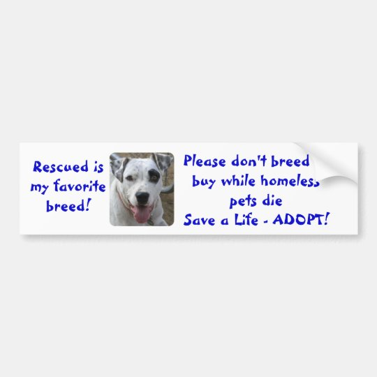 Don't Breed or Buy While Homeless Pets Die