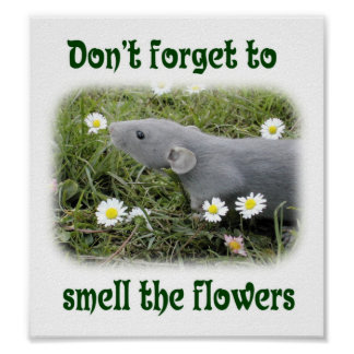 Don't forget to smell the flowers poster