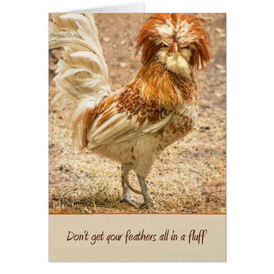 Don't Get Your Feathers All In A Fluff