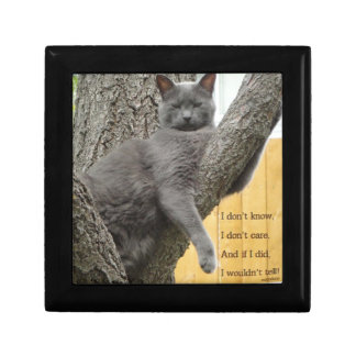 Don't know, don't care grey cat in a tree gift box