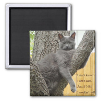 Don't know, don't care grey cat magnet
