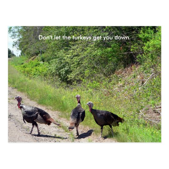 Don't Let the Turkeys Get You Down Postcard