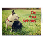 Don't Let Your Day Go To The Dogs, Birthday Card