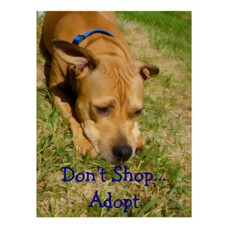 Don't Shop...Adopt Poster