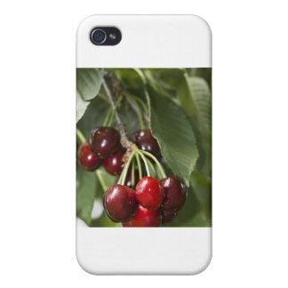 Door Country Cherries Covers For iPhone 4