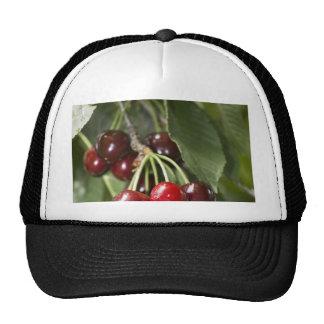 Door Country Cherries Hats