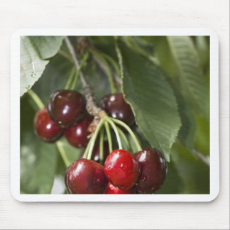 Door Country Cherries Mouse Pad