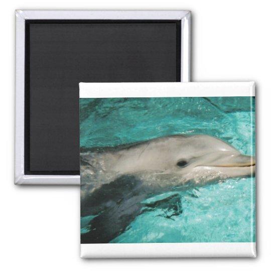 Dophin Blue Sea Ocean Square Magnet
