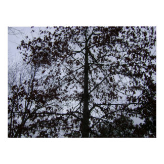 dormant maple tree poster