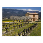 Dormant vineyard, fruit blossoms, stone house, postcard