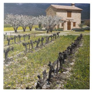 Dormant vineyard, fruit blossoms, stone house, tile