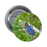Double Banded Scoliid Wasp on Mint Pinback Button