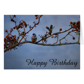 Double-barred finch on branch blank Birthday card