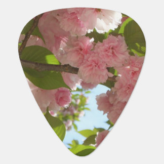 Double Blossoming Cherry Tree III Spring Floral Plectrum