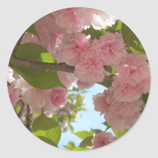 Double Blossoming Cherry Tree III Spring Floral Round Sticker