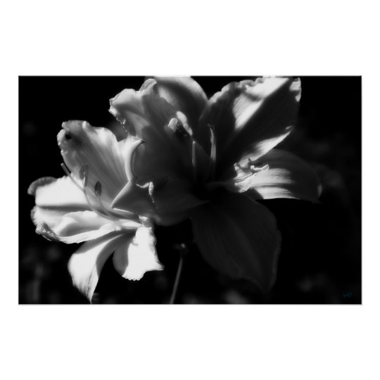 Double Daylilies Black and White Poster Print