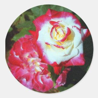 Double Delight Tea Roses Round Stickers