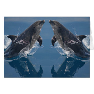 Double Dolphins Note Card