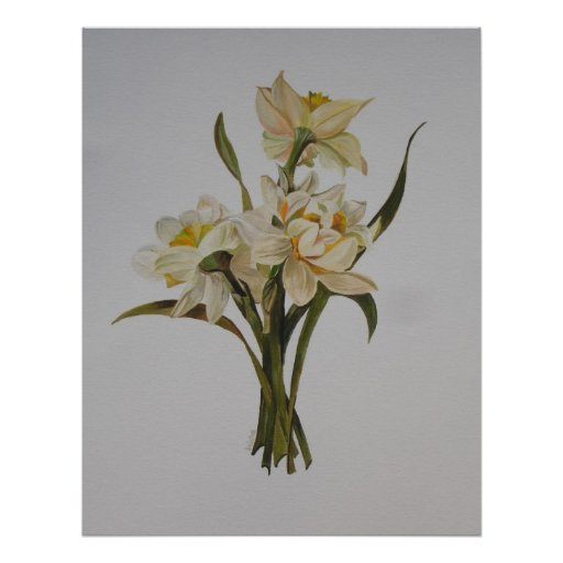 Double Narcissi Posters