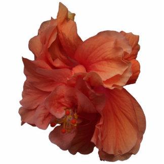 double peach hibiscus flower photo sculptures