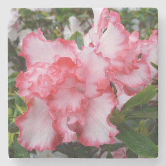 Double Red and White Azaleas Spring Floral Stone Coaster