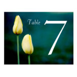 Double Sided Tulip table card Post Cards