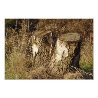 Double Stump Photo Art