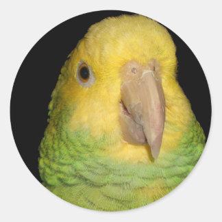 Double Yellowhead Amazon Parrot Classic Round Sticker