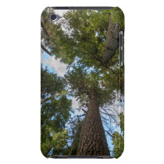Douglas Fir tree canopy Barely There iPod Case