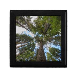 Douglas Fir tree canopy Gift Box