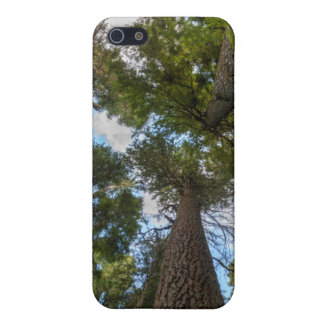Douglas Fir tree canopy iPhone 5 Case
