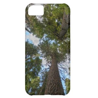 Douglas Fir tree canopy iPhone 5C Case