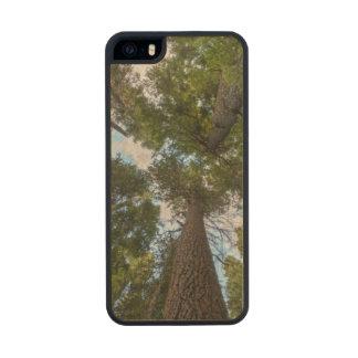 Douglas Fir tree canopy iPhone 6 Plus Case