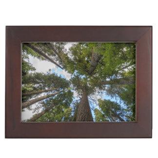 Douglas Fir tree canopy Keepsake Box