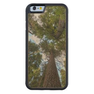 Douglas Fir tree canopy Maple iPhone 6 Bumper Case