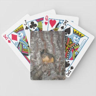 Douglas Squirrel Oregon Cascades Bicycle Card Deck