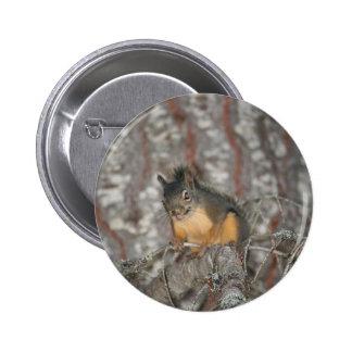 Douglas Squirrel Oregon Cascades Buttons