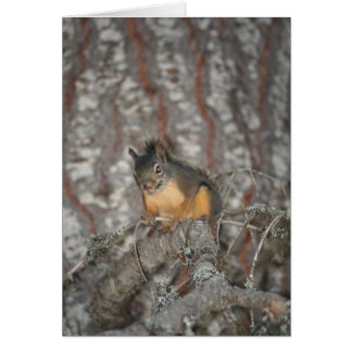 Douglas Squirrel Oregon Cascades Card