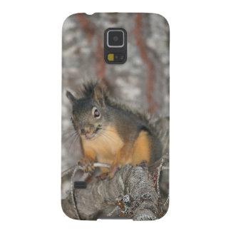 Douglas' Squirrel, Oregon Cascades Galaxy S5 Case