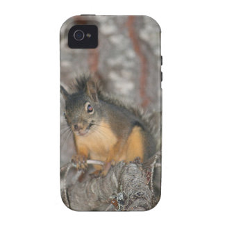 Douglas Squirrel Oregon Cascades Vibe iPhone 4 Covers