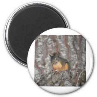 Douglas Squirrel Oregon Cascades Fridge Magnet