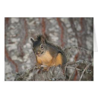 Douglas' Squirrel, Oregon Cascades Greeting Card