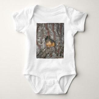 Douglas' Squirrel, Oregon Cascades Infant Creeper