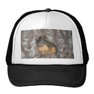 Douglas Squirrel Oregon Cascades Mesh Hat