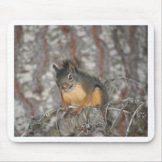 Douglas' Squirrel, Oregon Cascades Mouse Pad