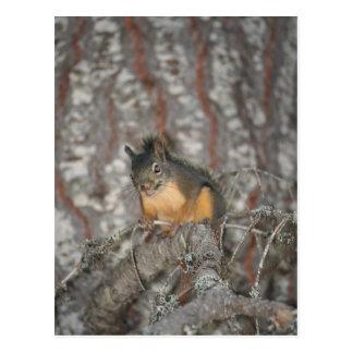 Douglas Squirrel Oregon Cascades Post Card