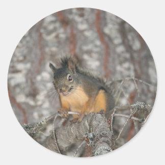 Douglas' Squirrel, Oregon Cascades Round Sticker