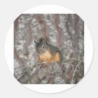 Douglas Squirrel Oregon Cascades Round Sticker
