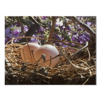 Dove Egg Poster