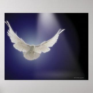 Dove flying through beam of light poster